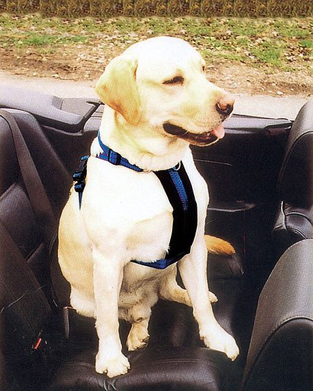 Car and Walking High Quality Dog Harness